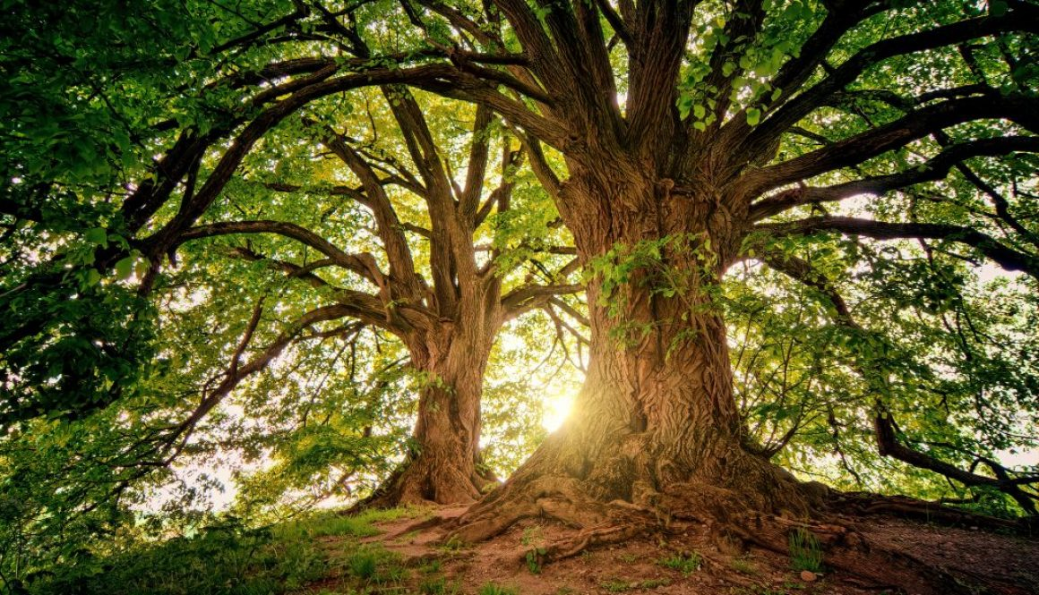 tree-3822149